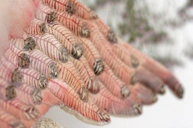 swan doll textile art